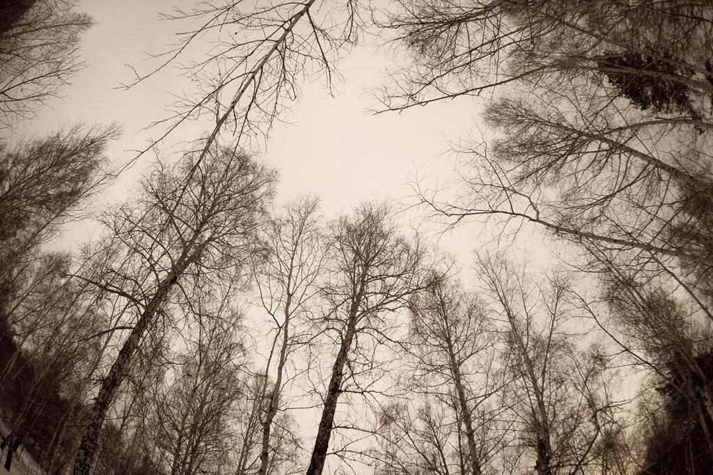 фото шумел сурово брянский лес