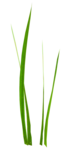 Bush and Grass  (112).png