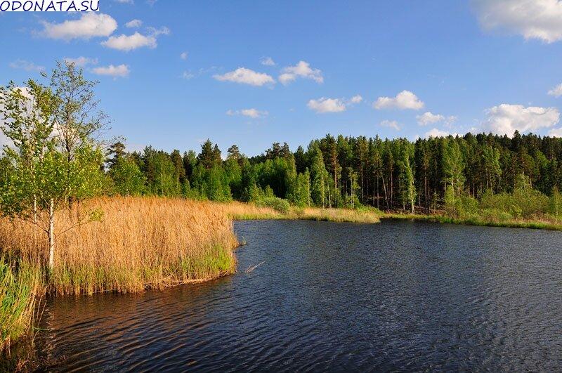 Вокруг водоёма лес (27.06.2013)