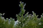 bush_png_by_gd08-d2ys7xf.png
