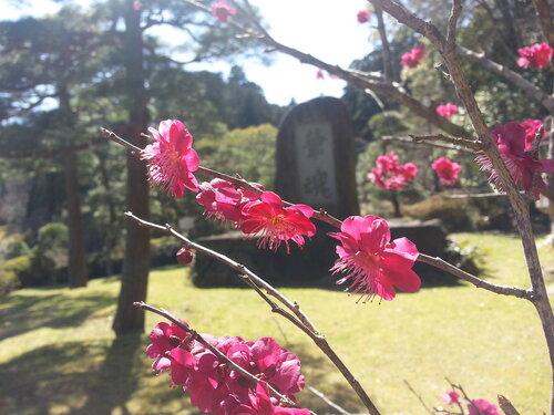 Живописный парк при храме в Нарите