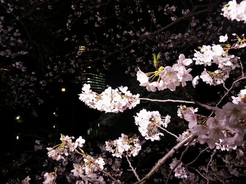 С близкого расстояния видно, насколько цветы густые