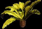 Palms  (17).png