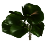 Palms  (41).png