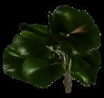 Palms  (41).png