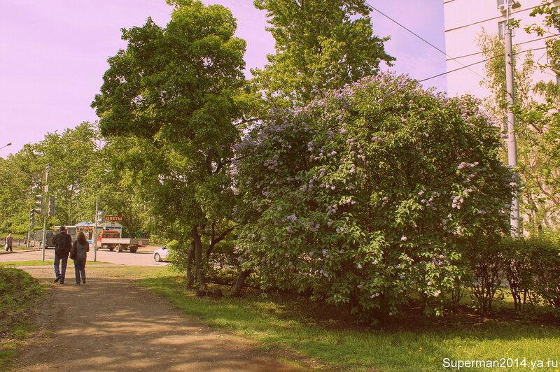 Сиреневый бульвар