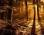 Gold nature (36).jpg