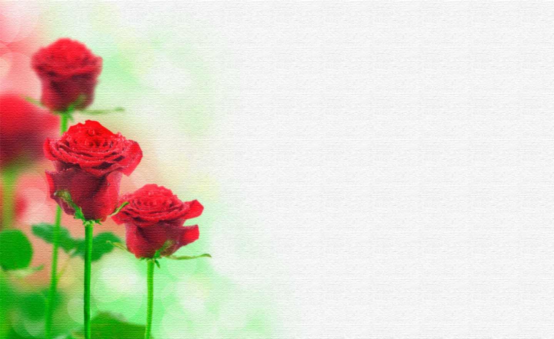 картинки цветы фоны