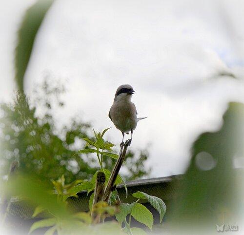 птичка-мама