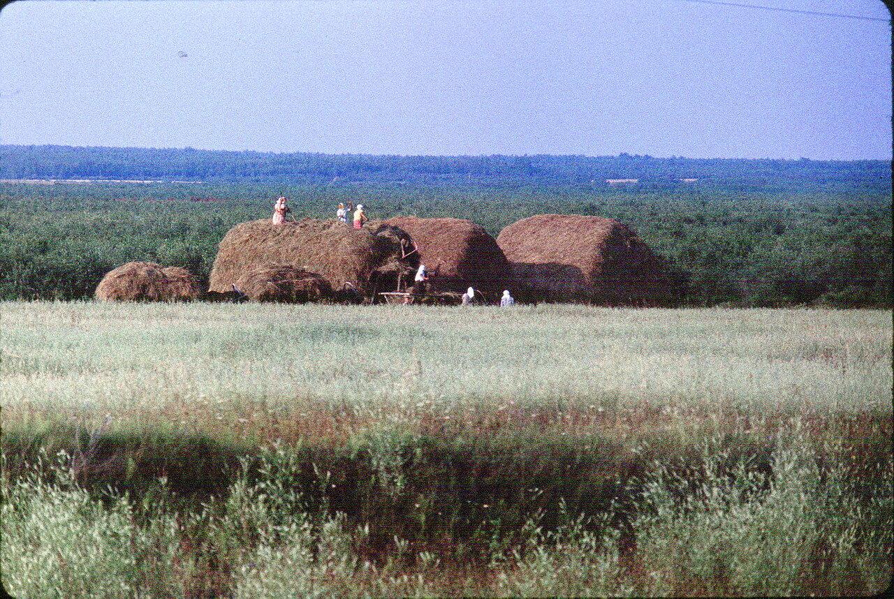 Полевые работы в Белоруссии