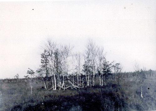<a target='new' href='http://img-fotki.yandex.ru/get/9154/97867398.16/0_900d4_d82edf5d_XXXL.jpg'>Вид на «Чистое болото», место подвига Ивана Сусанина. Фото нач. 20 века</a>