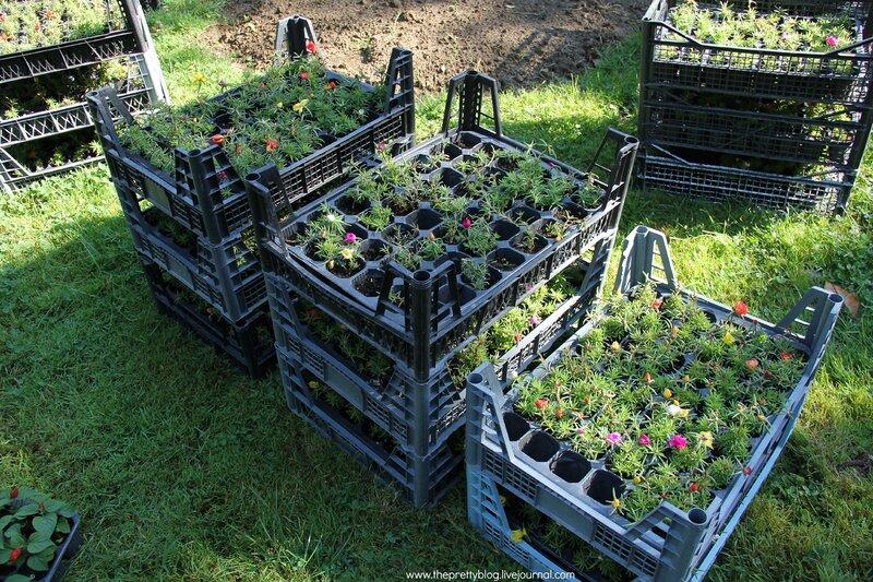 Можно ли цветы с огорода сажать на кладбище 44