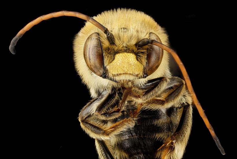 Макрофотографии разноцветных американских пчел 0 13d299 e7079f88 orig