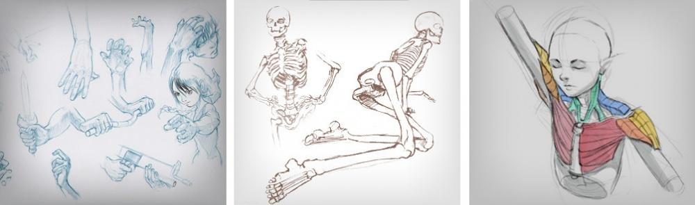 Упражнение нарисование рук (слева), нарисование скелета (поцентру), изучение мышц (справа). 4. Ко