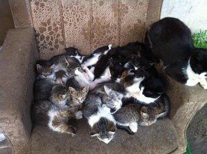 В нашей квартирке-кресле много братиков и сестренок