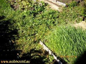 Как подстричь огород