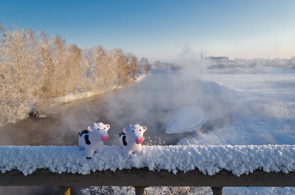 """В зимнее время очень эффектно смотрится пар над речкой, снятый в """"золотой час фотографии"""". Пример фото с Nikon D5100 KIT 18-55"""