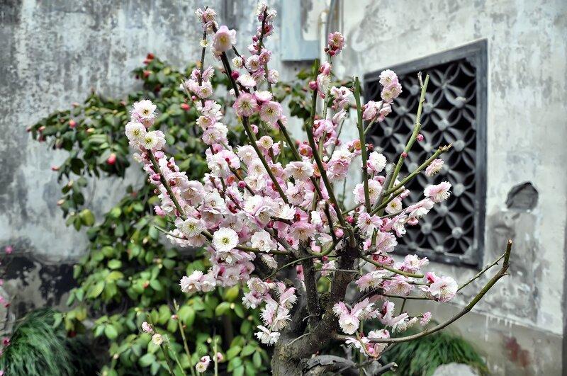 Китай. Шанхай. Пора цветения
