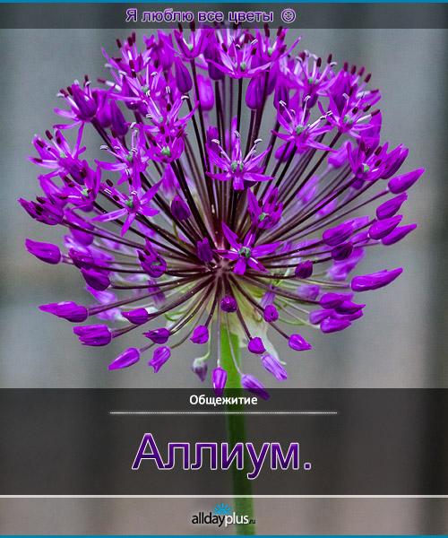 Я люблю все цветы, часть 49.