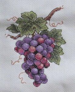 dim_6888_grape_on_vine_07.jpg