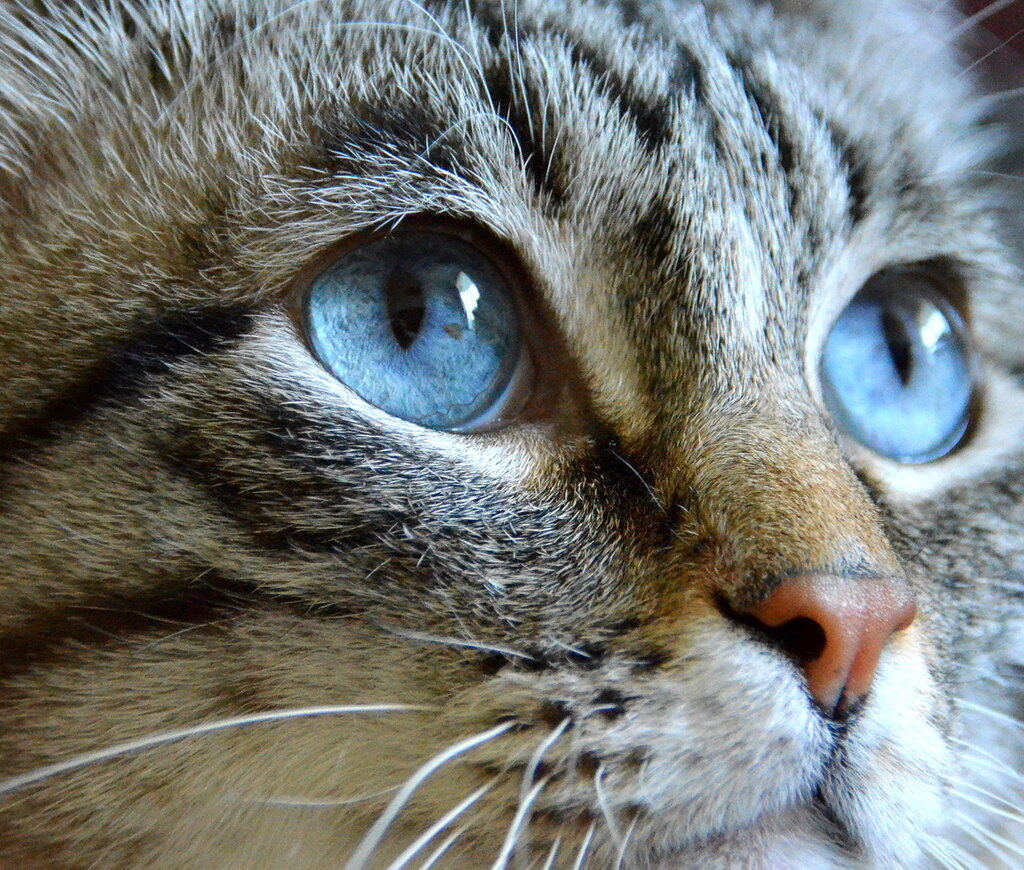 Аквамариновые глаза