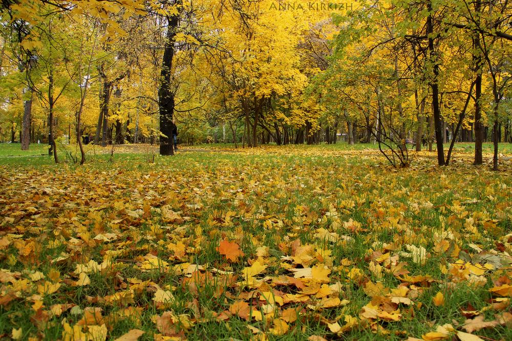 собрали картинки к стихотворению осень наступила все-таки мужчина