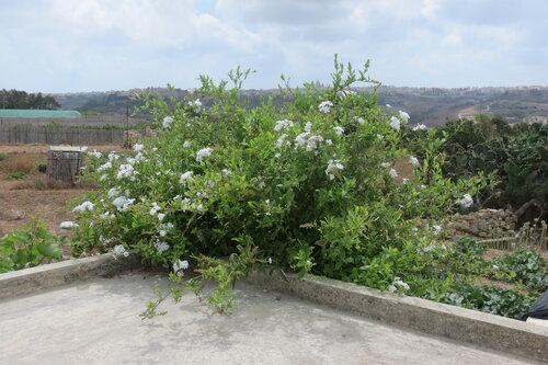 Цветущий куст