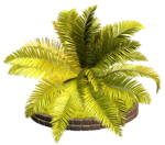 Palms  (22).png