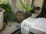 Приемный кот Вася