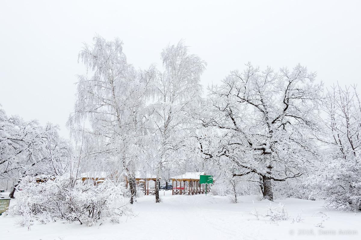 зима лес кумысная поляна фото 8