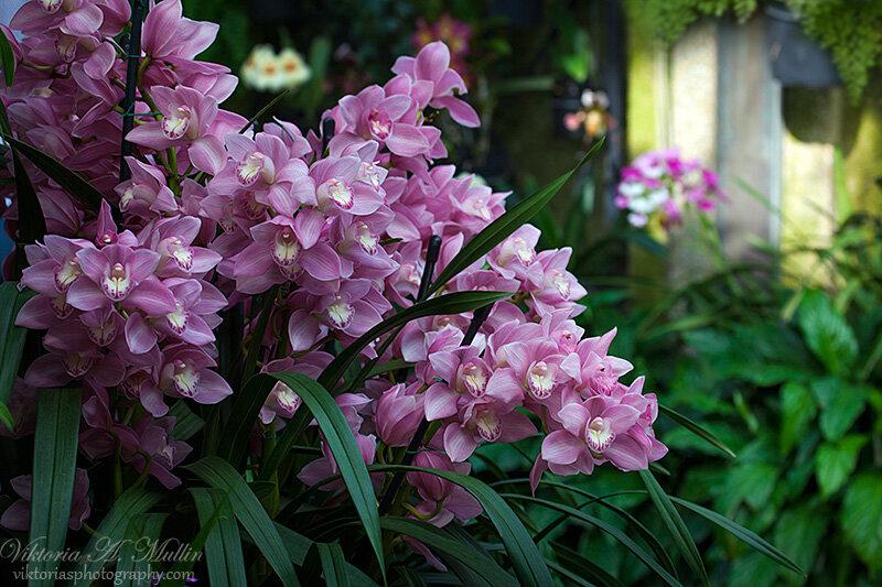 Орхидеи в оранжерее Садов Дюпона-Longwood Gardens-0627