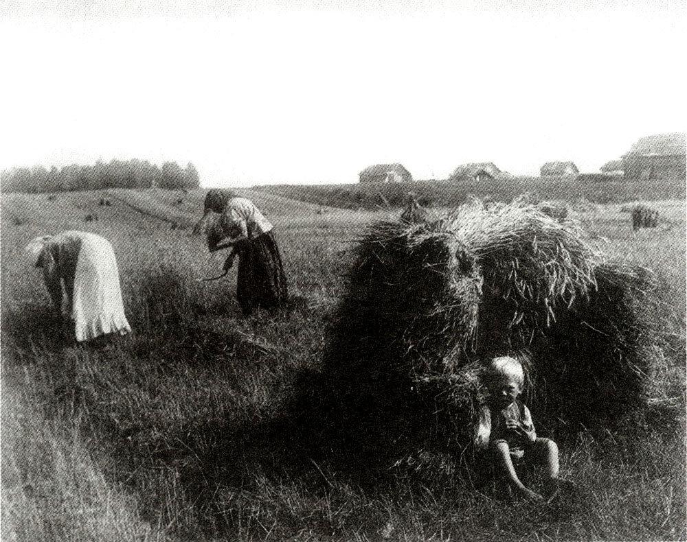 Жатва. Владимирская губ. Фото 1910-х гг.