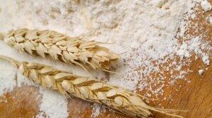 Пшеничную муку обогатят железом и фолиевой кислотой