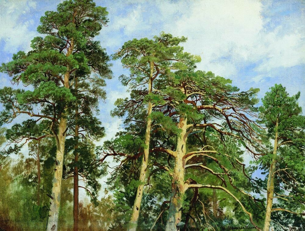 Верхушки сосен.Этюд 1890-е 40.7х53.jpg