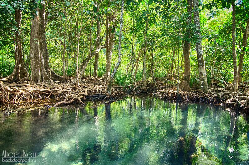 Парк Pa Phru Tha Pom Khlong Song Nam