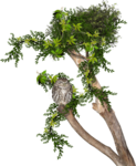 Carena-In the Forest 60.png