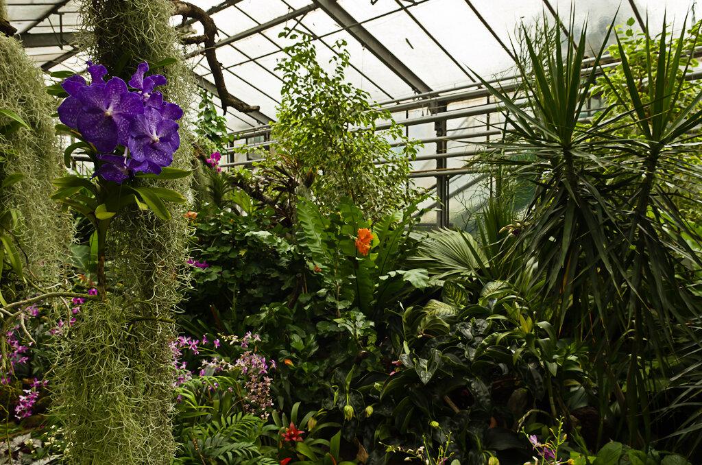 Тропические заросли в теплицах парка Palmengarten