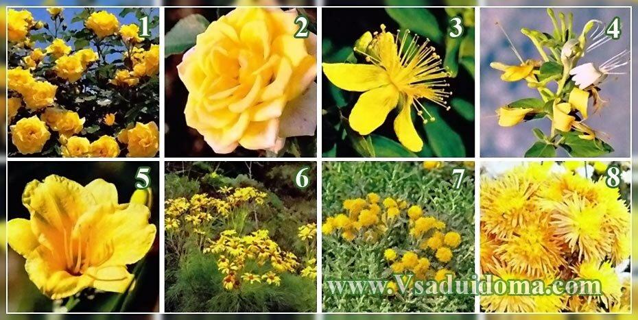 цветы для желтого цветника