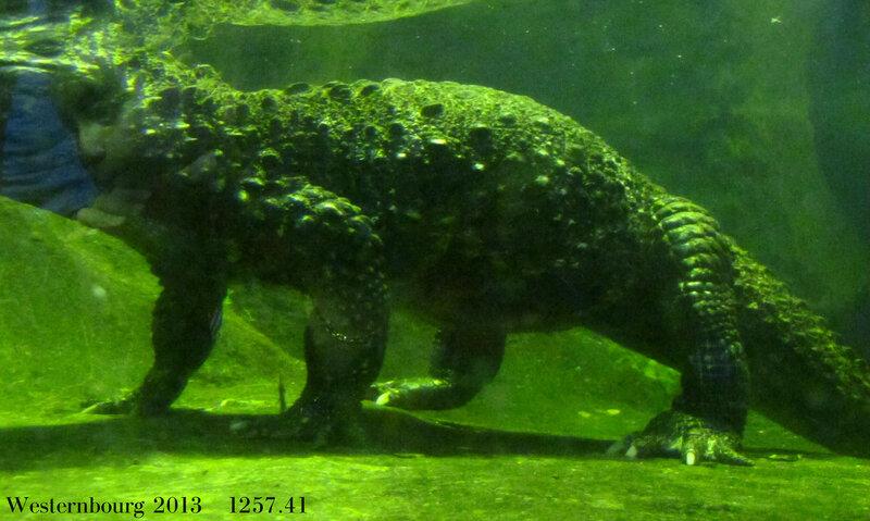 1257.41 Крокодил с человеческим лицом