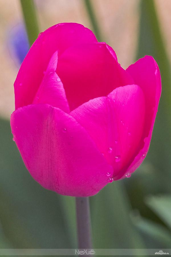 Я люблю все цветы, часть 38