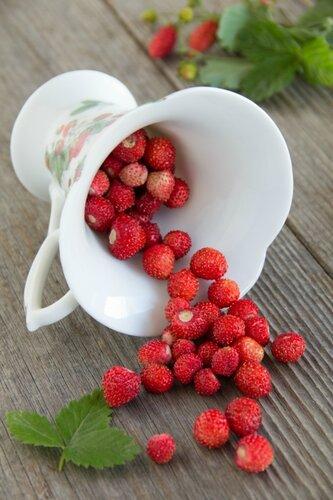 Wild strawberry.
