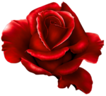 Roses (png)