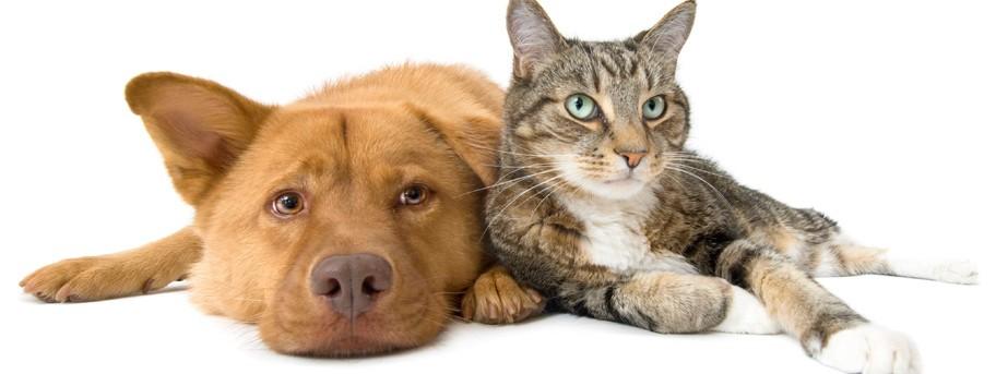С кем уживаются кошки