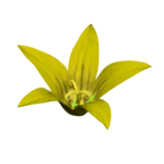 Golden Butterflys (113).png