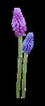Lavender Paradise (141).png