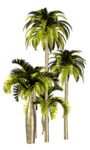 Palms  (28).png