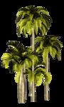 Palms  (28).png