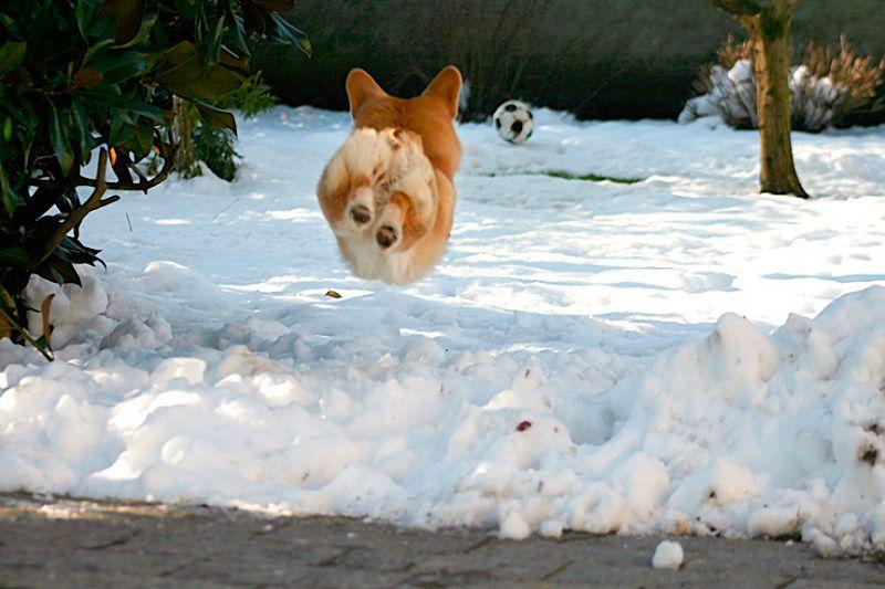 Фото животных в прыжке