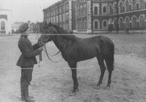 Казак с конем во дворе казарм.