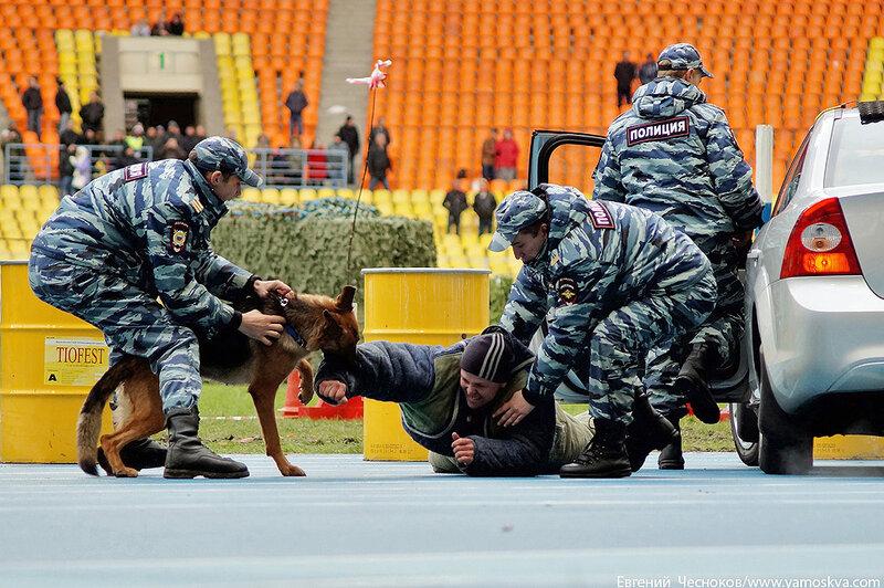 картинки полиции при задержании